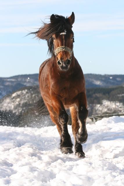 Winterfütterung bei Pferden