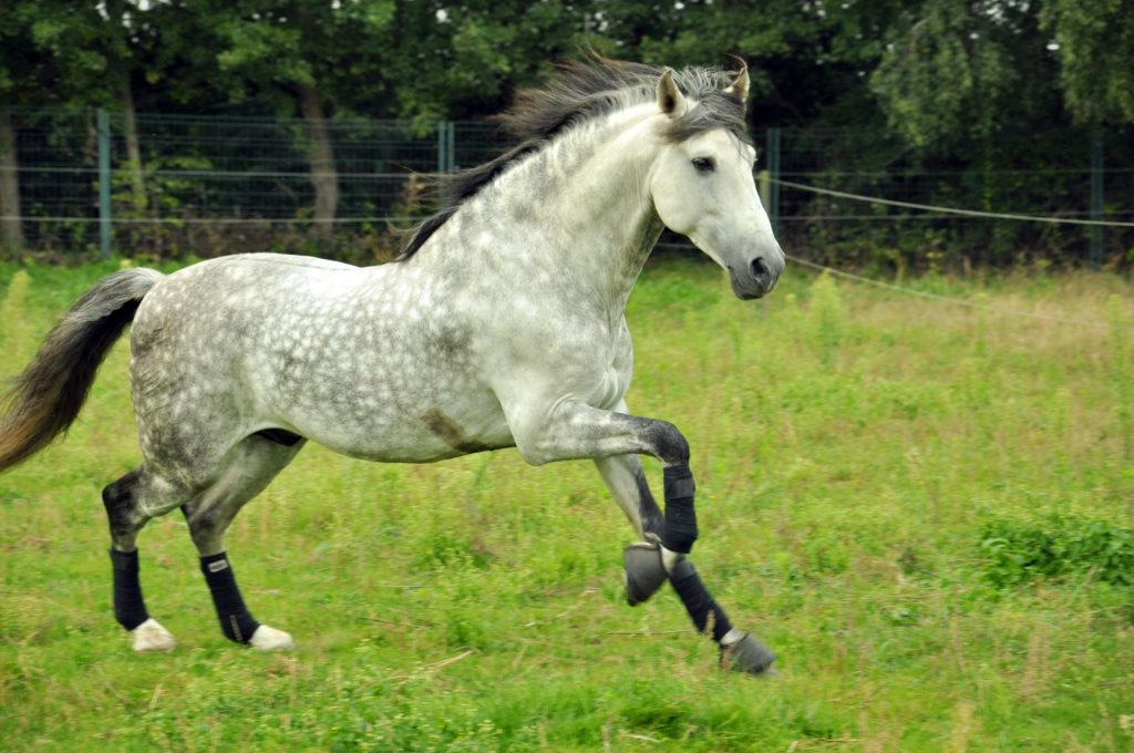 Futter für Pferd mit Sommerekzem.