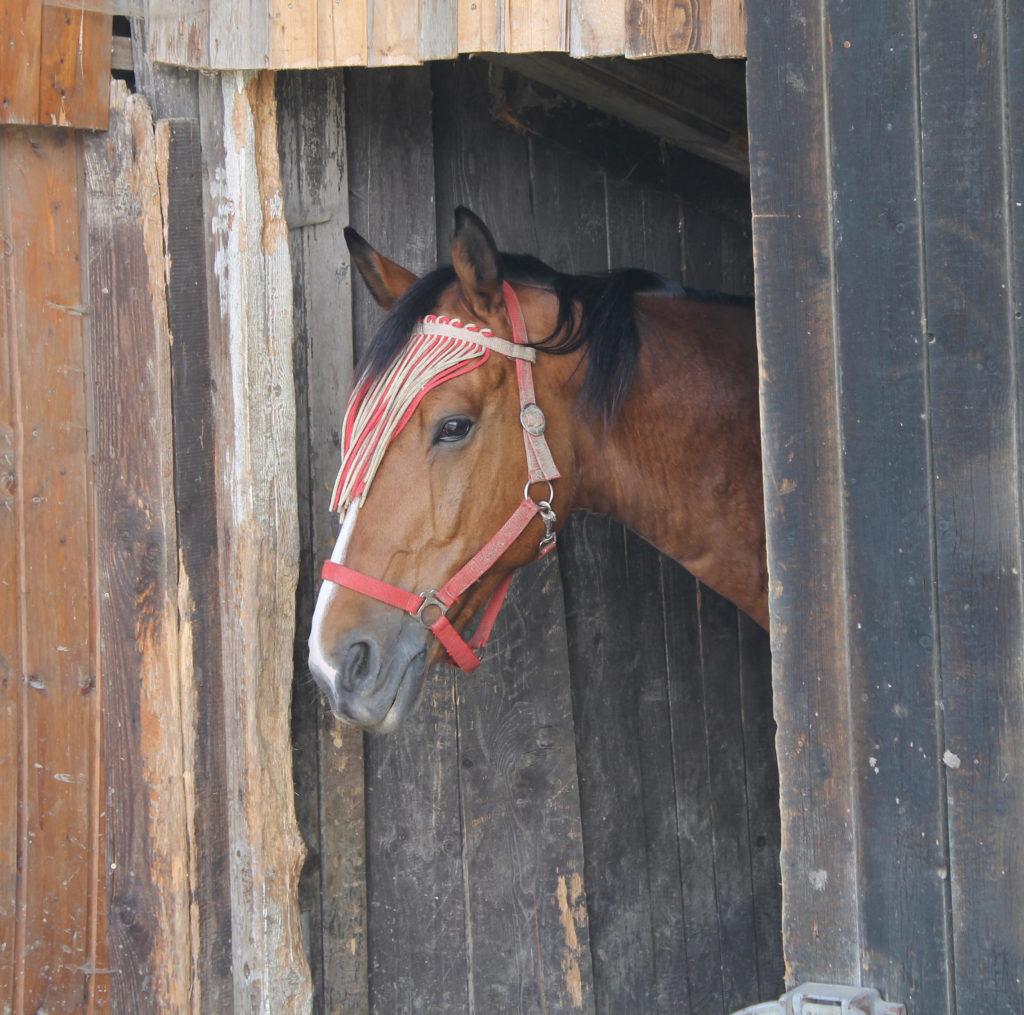 Pferd im Stall.