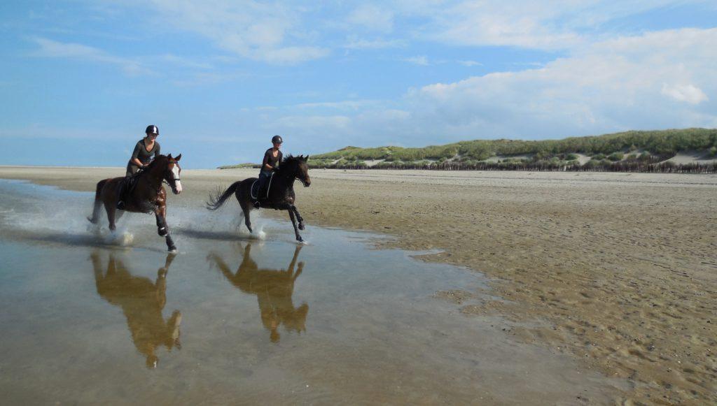 Im Sommer muss drauf geachtet werden, dass kein Elektrolytmangel beim Pferd entsteht
