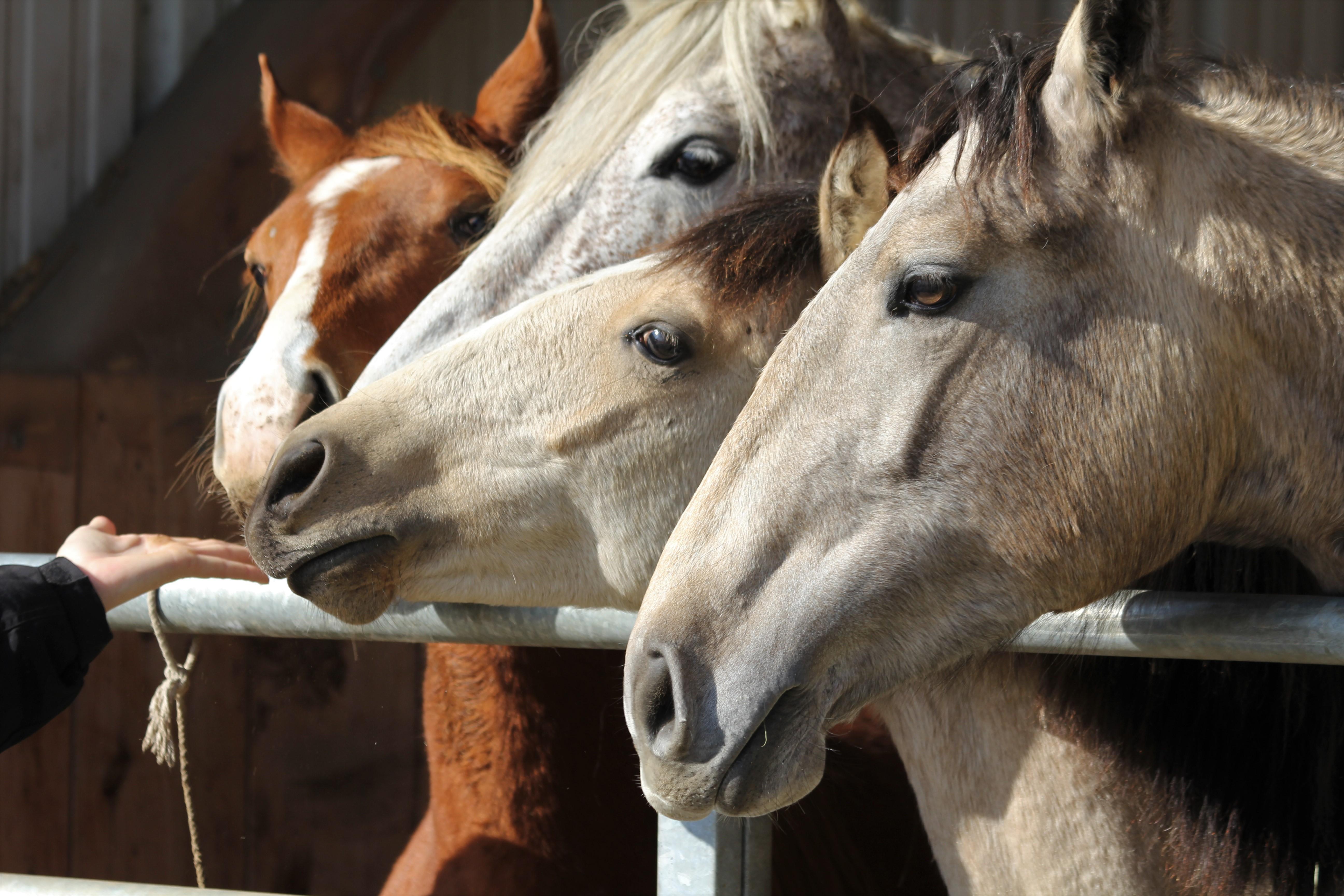 Rohasche im Pferdefutter. Was bedeutet das?