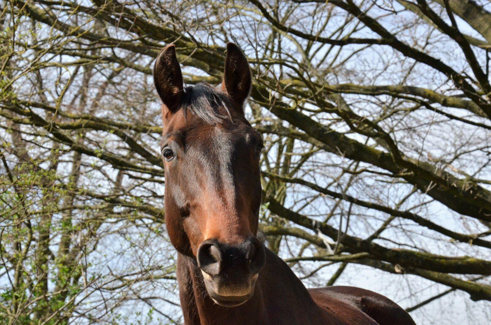 Eiweiße sind lebenswichtige Nährstoffe für das Pferd.