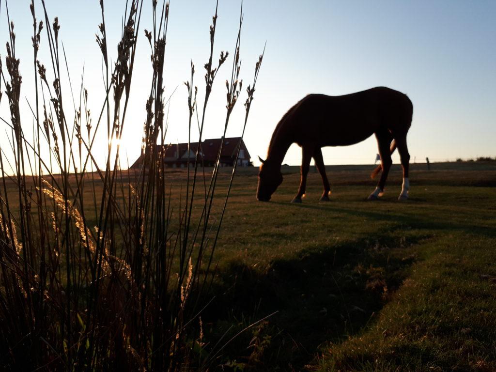 Pferd frisst auf Weide