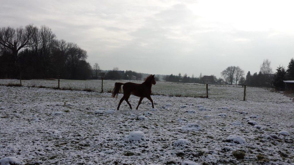 Die Atemwege des Pferdes können gezielt unterstützt werden.