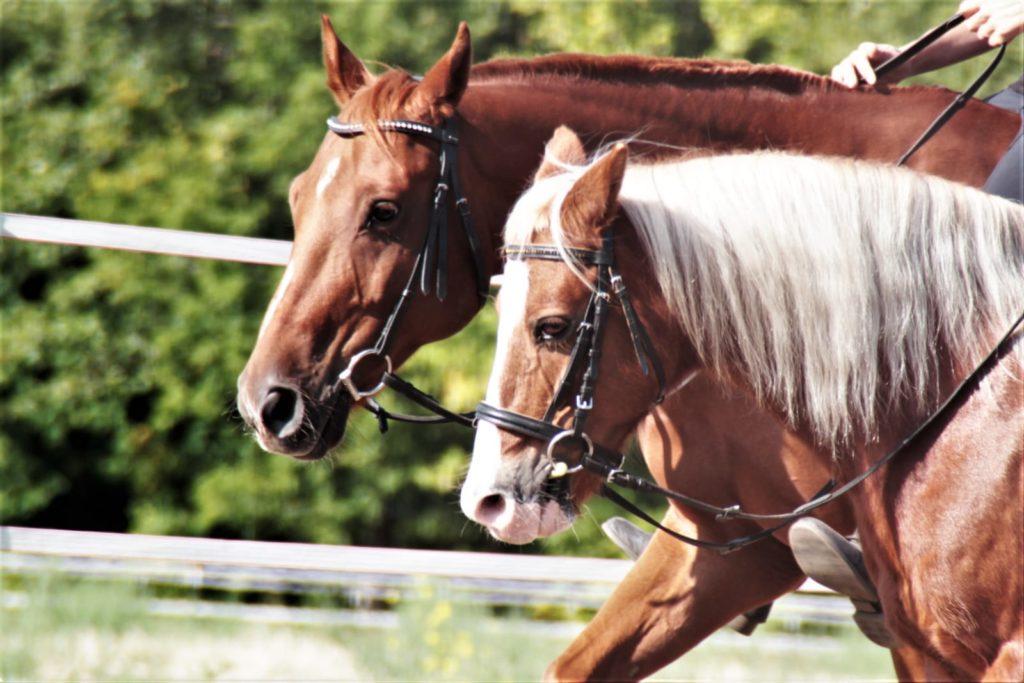 Pferde werden geritten