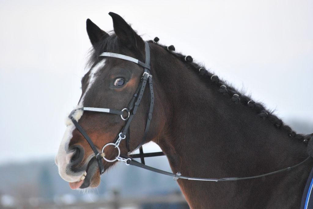 Pferd Mash im Winter