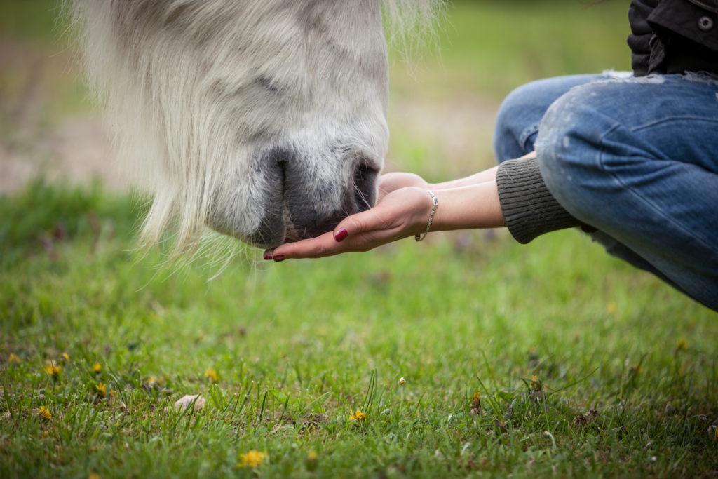Frau füttert Pferd von Hand Mineralfutter
