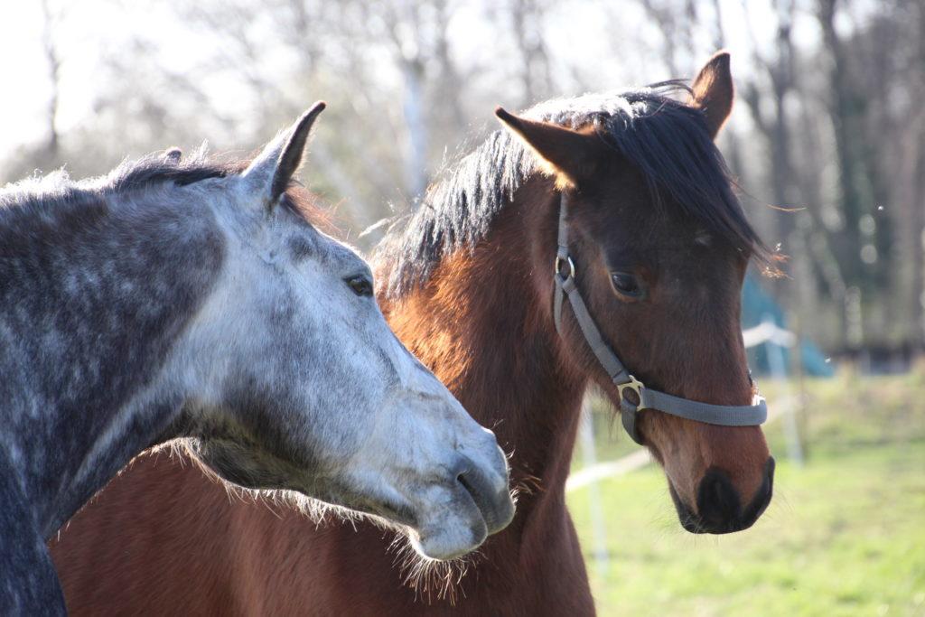 Fellwechsel Pferd: was füttern?