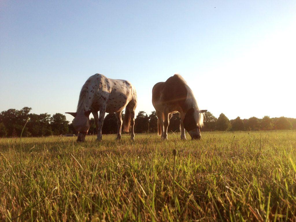 Temperaturschwankungen - so unterstützen Sie Ihr Pferd