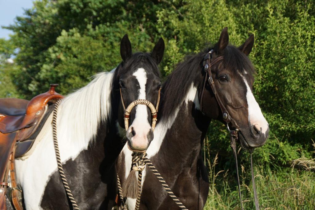 Sommerekzem Pferd - was hilft?