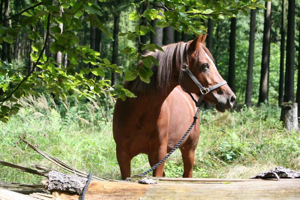 Mein Pferd in der Corona Krise richtig füttern